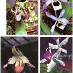 Орхидеи на открытках 0067 150x150 - Цветы