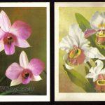 Орхидеи на открытках 0070 150x150 - Цветы