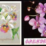 Орхидеи на открытках 0072 150x150 - Цветы