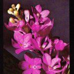 Орхидеи на открытках 0073 150x150 - Цветы