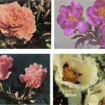 Открытки № 0009 0012 150x150 - Цветы