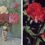 Открытки № 0013 0014 150x150 - Цветы