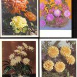 Открытки № 0013 0016 150x150 - Цветы