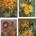 Открытки № 0017 0020 150x150 - Цветы