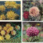 Открытки № 0021 0024 150x150 - Цветы