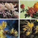 Открытки № 0021 0024 2 150x150 - Цветы