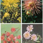 Открытки № 0025 0028 150x150 - Цветы