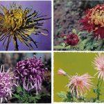 Открытки № 0025 0028 2 150x150 - Цветы