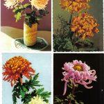Открытки № 0029 0032 150x150 - Цветы