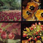 Откр. № 0001 0004 1 150x150 - Цветы