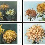 Откр. № 0001 0004 150x150 - Цветы