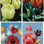 Откр. № 0009 0012 1 150x150 - Цветы