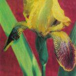 Откр. № 001 150x150 - Цветы