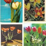 Откр. № 0013 0016 150x150 - Цветы