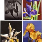 Откр. № 002 005 150x150 - Цветы