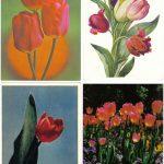Откр. № 0021 0024 150x150 - Цветы