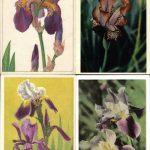 Откр. № 006 009 150x150 - Цветы