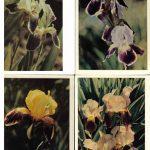 Откр. № 014 017 150x150 - Цветы