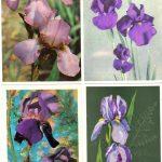 Откр. № 018 021 150x150 - Цветы