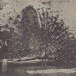 Павлин 150x150 - Птицы