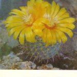 Пародия изменчивая 1 150x150 - Цветы