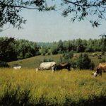 Пейзаж центральной России 150x150 - Пейзажи