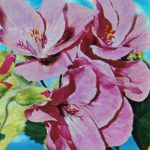 Пеларгония плющелистная 150x150 - Цветы