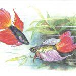 Петушки 150x150 - Аквариумные рыбки