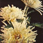 Победа 150x150 - Цветы
