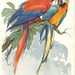Попугаи 1 150x150 - Птицы