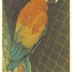 Попугай красно синий ара 150x150 - Птицы