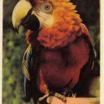 Попугай 150x150 - Птицы