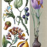 Пряные растения 150x150 - Удивительные растения