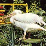 Птица за счётами 150x150 - Птицы