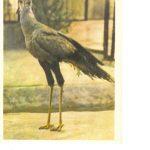 Птица секретарь 1 150x150 - Птицы