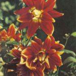Рапалло 150x150 - Цветы