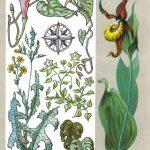 Растения индикаторы 150x150 - Удивительные растения