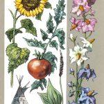 Растения переселенцы 150x150 - Удивительные растения