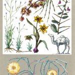 Растения пустыни 150x150 - Удивительные растения