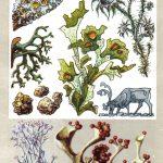 Растения сфинксы 150x150 - Удивительные растения