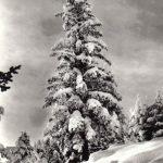 Рила. Зимний пейзаж 150x150 - Пейзажи