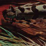 Розалия альпийская  150x150 - Жуки