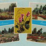 Розариум 150x150 - Цветы
