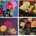 Роза 00001 00004 150x150 - Цветы