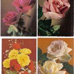Роза 00073 00076 150x150 - Цветы