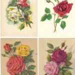 Роза 00101 00104 150x150 - Цветы