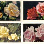 Роза 00121 00124 150x150 - Цветы