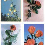 Роза 00141 00144 150x150 - Цветы
