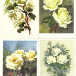 Роза 00157 00160 150x150 - Цветы