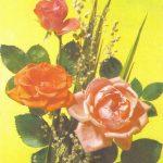 Роза 00166 150x150 - Цветы